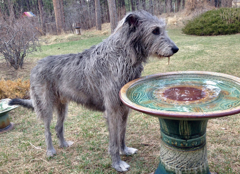 Spokeshound, Atticus, with Extra Large Bird Bath in Hobbit and Tenmoku